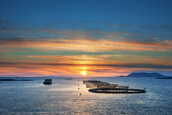 : Midt-Norsk Havbruk i Rørvik har elektrifisert flere forflåter til merdene med landstrøm. Merdene som ligger lenger ut krever en annen løsning, som for eksempel hydrogen. Disse merdene ligger i Humulen.