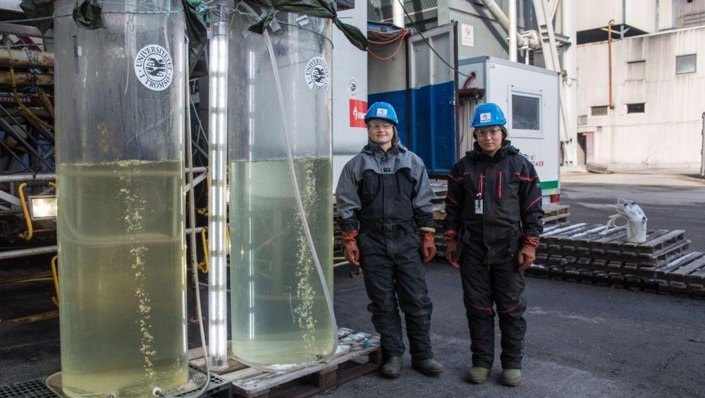 Algene fra smelteverket Finnfjord skal brukes i fiskefôr. Her med forskerne Nerea Johanna Aalto og Gunilla Eriksen.