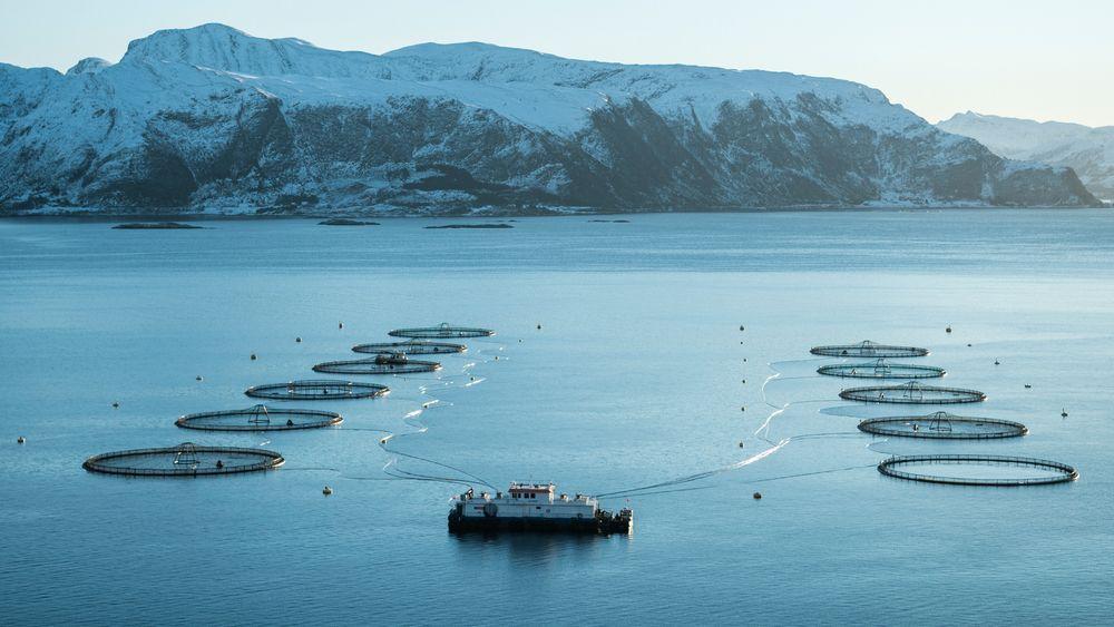 Mowi bytter installerer nå batteripakker på flere av sine  fôrflåter. Dette bildet er fra Beitveit i Vanylvsfjorden i Nordfjord.