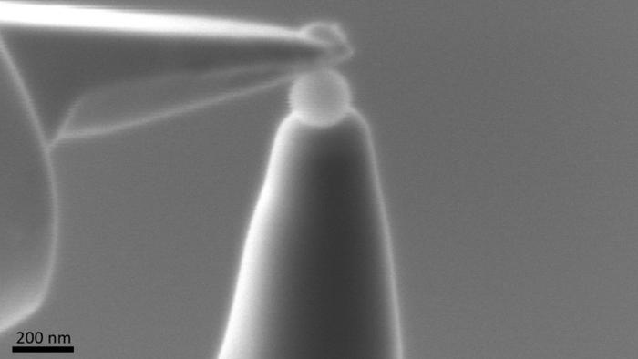To the point: Her brukes en liten nål til å plukke opp en nanoplast-kule som et ledd i forberedelsen for analyse med atomsondetomografi. Bildet er tatt med et elektronmikroskop ved NTNU Nanolab.
