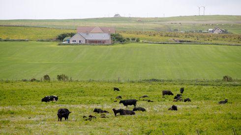 Utsikt over landskapet ved Kirkwall på Orknøyene, som i likhet med Shetland er i ferd med å gjennomføre det grønne skiftet med hav- og vindkraft.