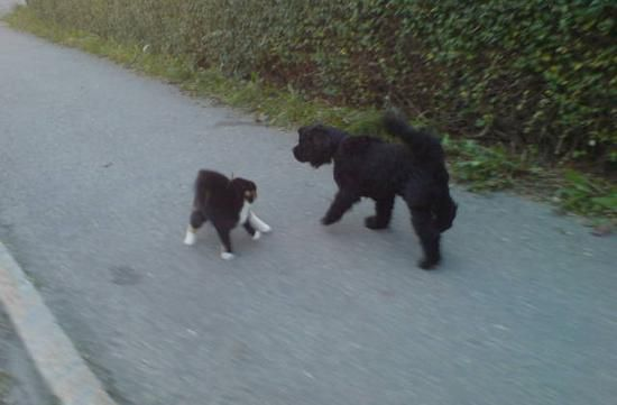 #9) Katt og hund