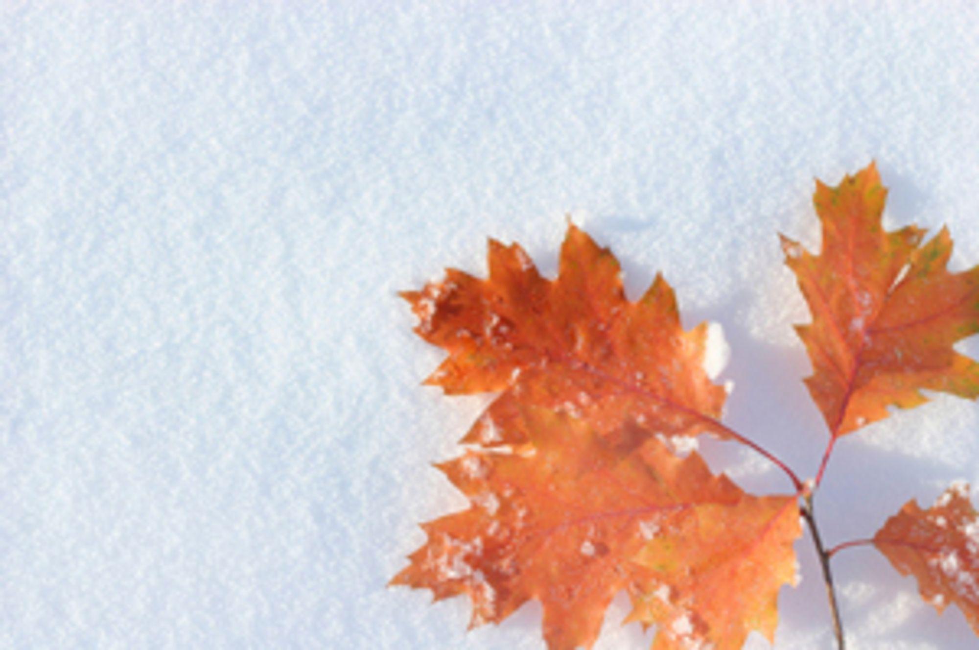 © dra_schwartz<br> Fargede objekter skaper en flott kontrast til den hvite snøen.
