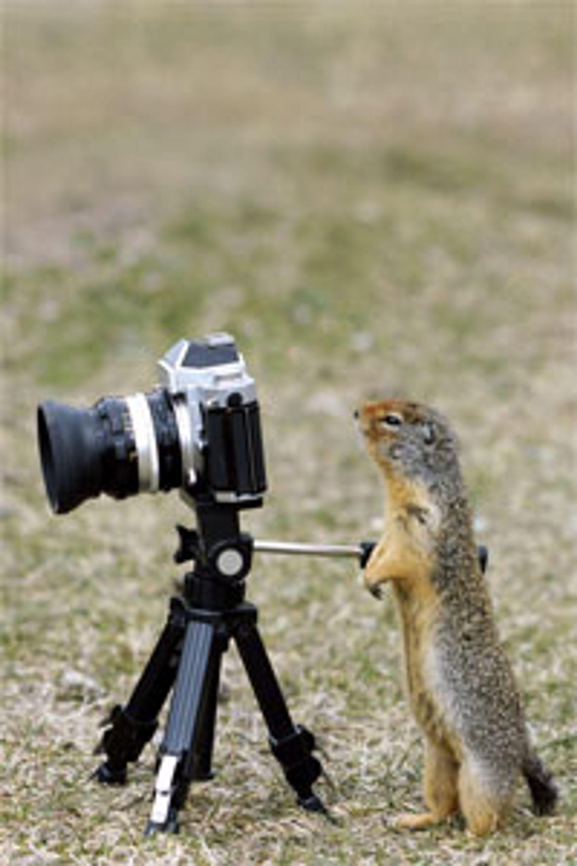 En skikkelig fotograf som setter pris på et skikkelig stativ.