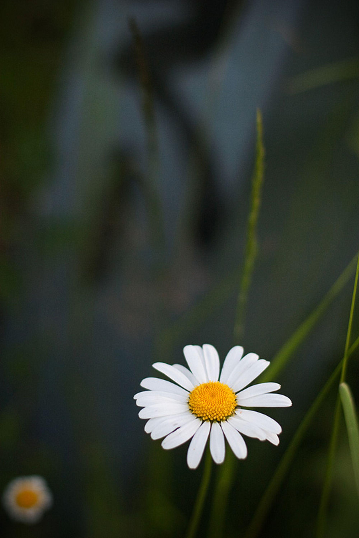 foto: tomsi42