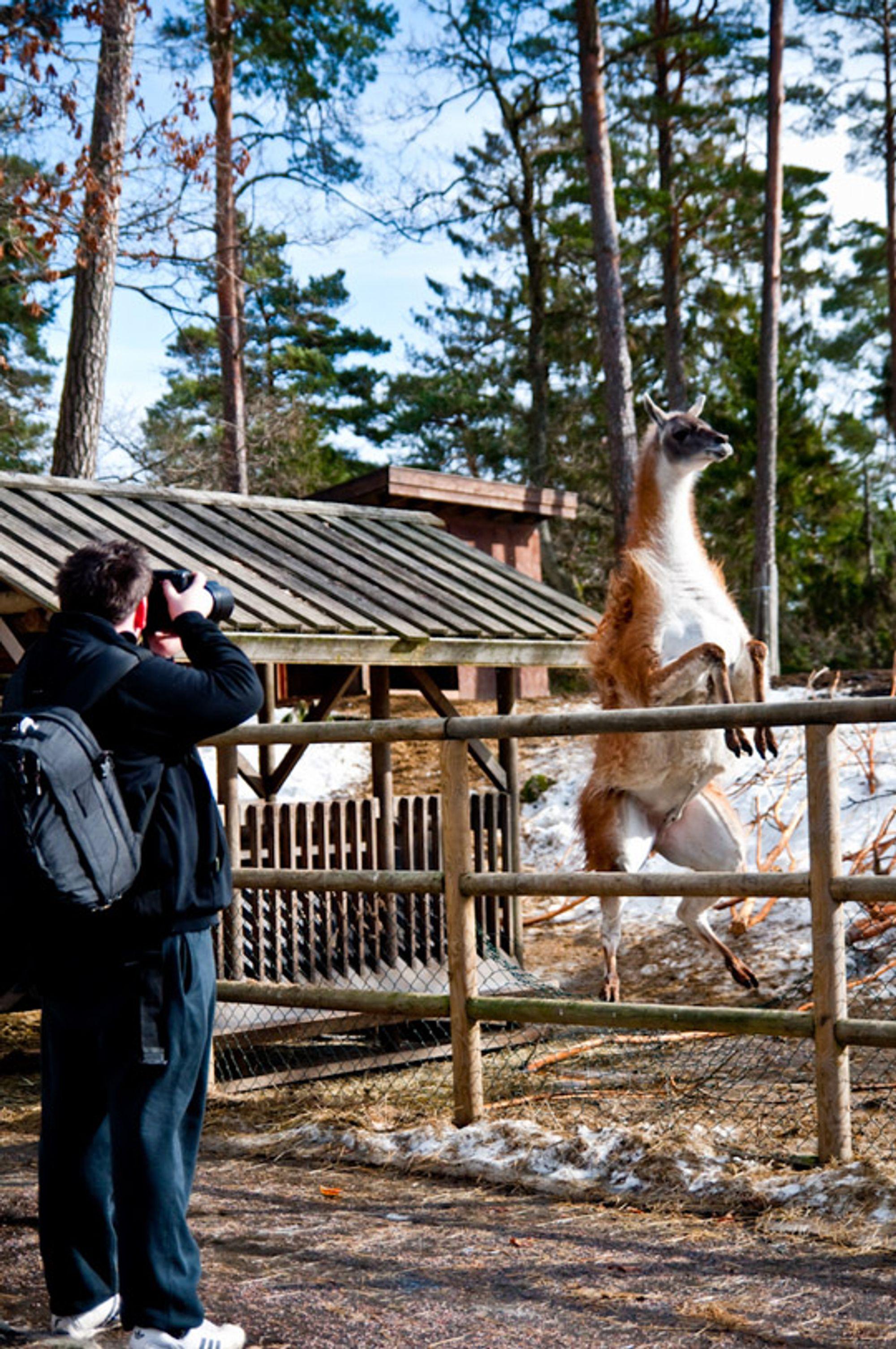 Posøren og fotografen I. Foto: archongamer