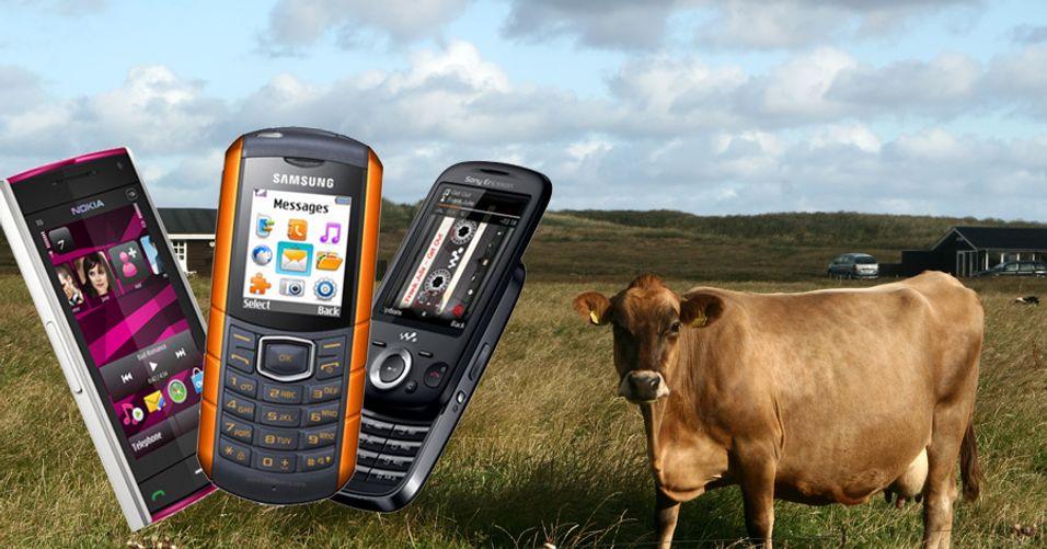 Disse mobilene slippes ut på beite i juli