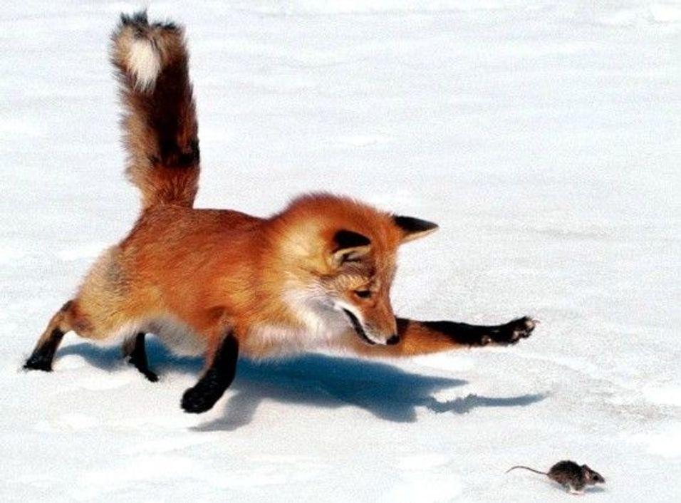 GUIDE: Firefox med turbohastighet