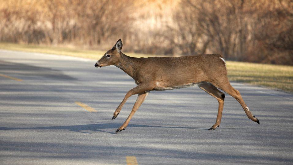 App skal redde Bambi