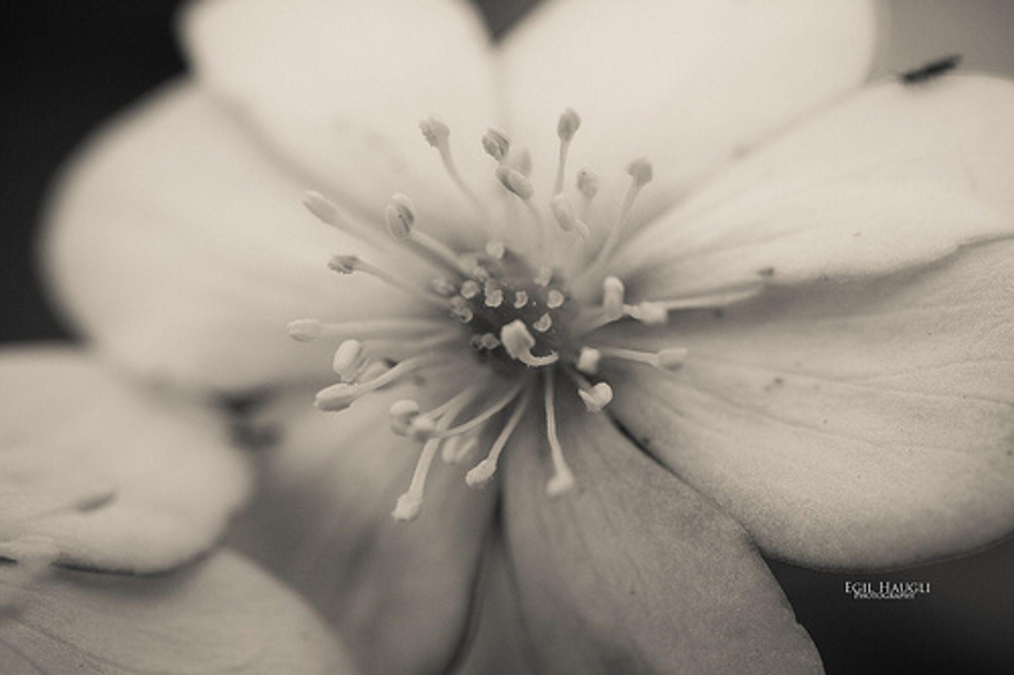 Foto: egilrs