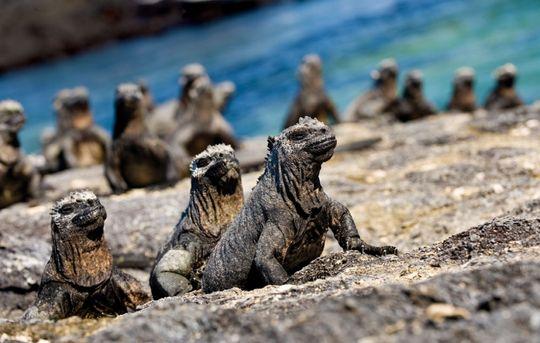 Galapagos-øyene. Foto: Alison Wright
