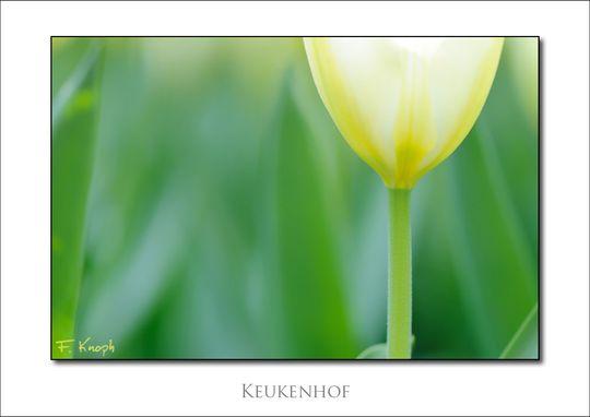 Foto: FKnoph