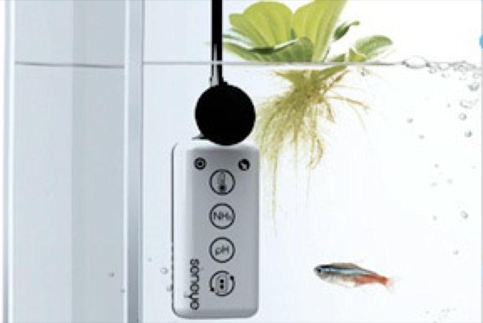 Pass gullfisken med mobilen mens du er på ferie