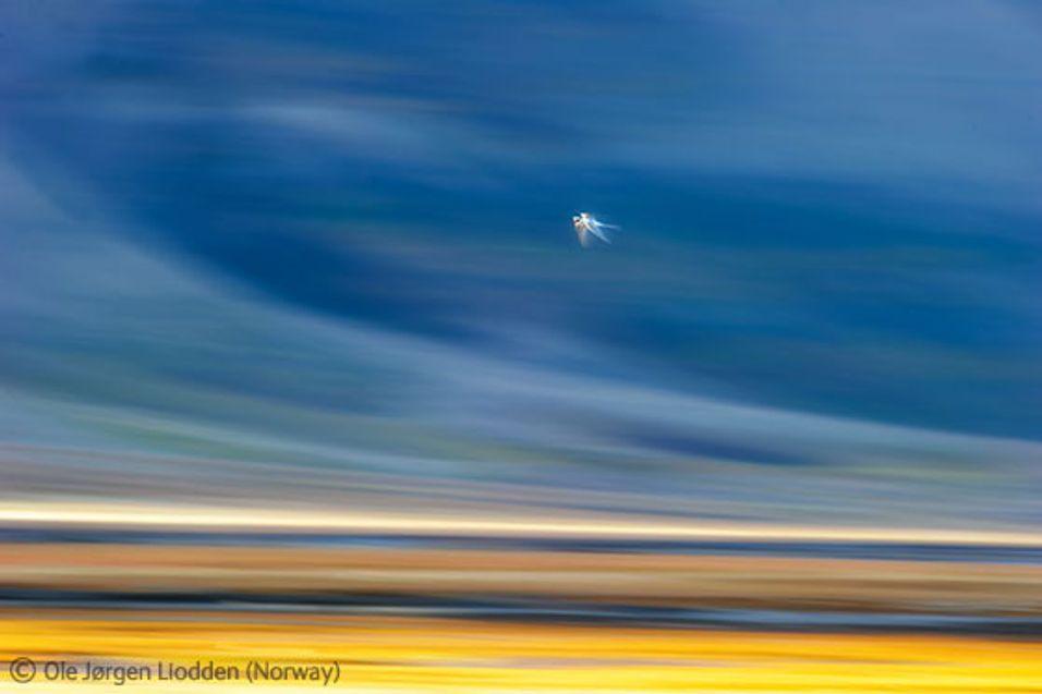 Norske fotografer høster internasjonale priser