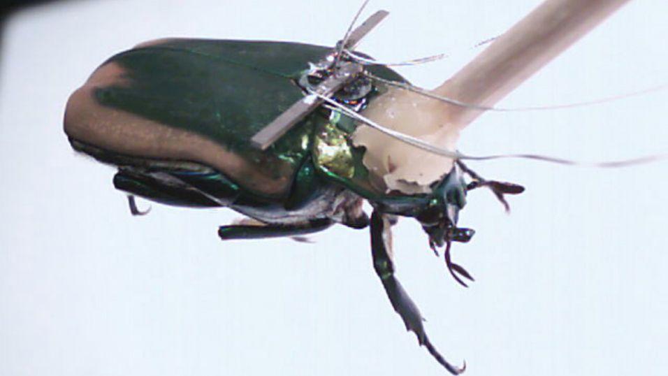 Skal høste energi fra insekter for å lage kyborger